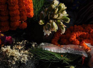 flower in kathmandu